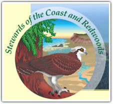 stewards-of-the-coast-redwoods
